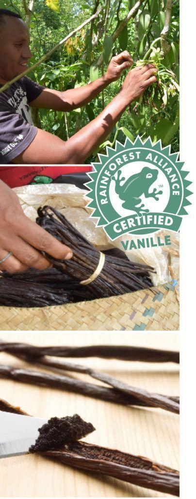 Herstellungsprozess der Bourbon-Vanille - viel Handarbeit wird gezeigt